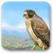 勇敢的猎鹰