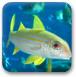深海找贝壳