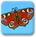 蝴蝶宝宝诞生记