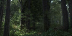 《天国:拯救》画面展示视频