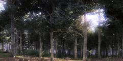 《天国:拯救》战斗实用技巧汇总 游戏怎么操作战斗?