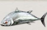 葛利亚巨鱼