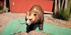 《孤岛惊魂5》灰熊皮怎么获得?灰熊皮刷取方法介绍