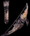 搔鸟弓III