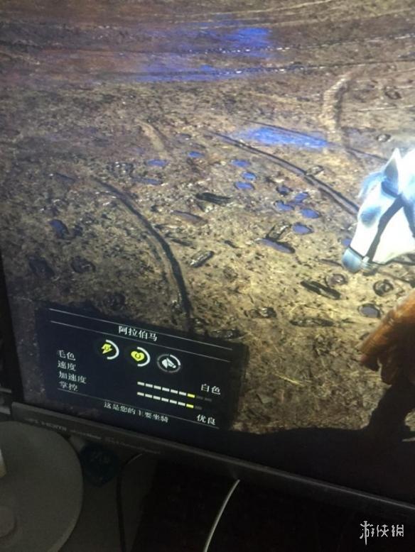 荒野大镖客2稀有阿拉伯马获取攻略 稀有阿拉伯马位置一览