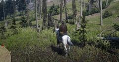 《荒野大镖客2》传奇公鹿找不到位置怎么办 传奇公鹿位置地图分享
