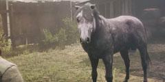 《荒野大镖客2》怎么刷马匹?刷马匹方法介绍