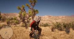 《荒野大镖客2》全药草位置图文分享 药草在哪里?