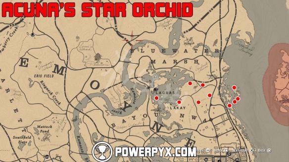 《荒野大镖客2》全稀有花朵位置地图标注 稀有花朵在哪里?