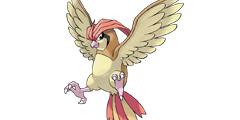 《精灵宝可梦Let's Go》比比鸟全招式一览 比比鸟属性相性说明