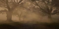 《荒野大镖客2》线上模式有哪些奖杯?线上模式奖杯一览