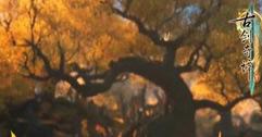 《古剑奇谭3》百神祭所卡bug解决方法视频分享 卡bug怎么办