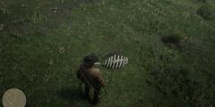 《荒野大镖客2》恐龙骨在哪里?全恐龙骨收集位置一览