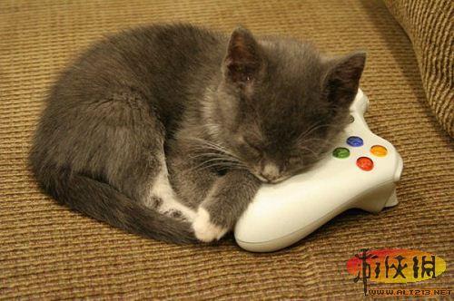 这也太逗了!可爱猫咪玩kinect趣事二三件