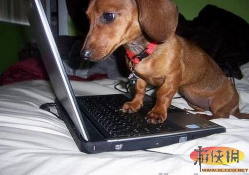 细看各类动物与电脑的亲密接触