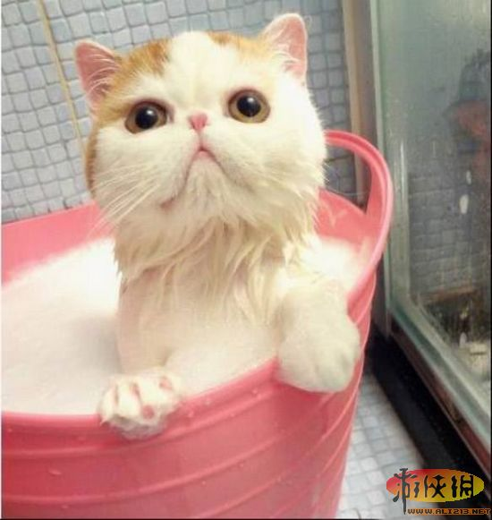 堪称是史上最萌的加菲猫!