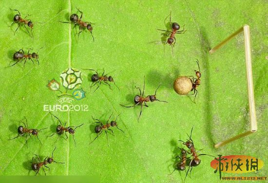 蚂蚁报恩手绘图