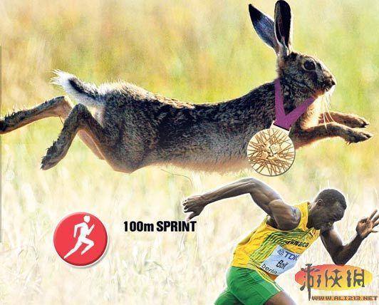 动物界奥运冠军大盘点:兔子百米跑赛过飞人