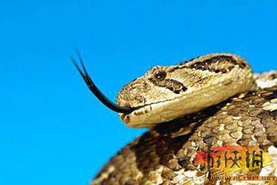 哪种蛇能夺得最危险爬行动物