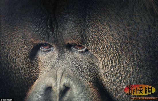 肢体语言与人类酷似 国外摄影师捕捉动物肖像