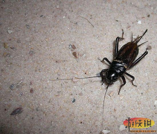 个人精子库   一个想要储存精子以备不时之需的人需要到冷冻精子库去,但是许多雌性动物不需要一个冷冻室就能够实现同样的功能。这是一种共同的策略,蚁后能够保持30年、蛇类7年、鸡30天、蝙蝠6个月。相比之下,人类精子在女性体内只能存活短短的3到5天。蟋蟀拥有较好的储存结构:雌性蟋蟀的精子储存器官以某种方法减缓精子的新陈代谢,将它们的存活周期延长到几个周。