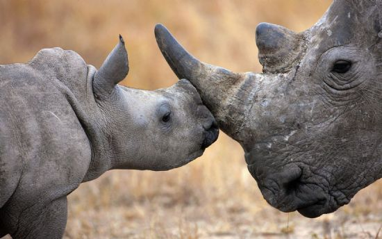 保护大自然的动物!微软最新win7/win8主题壁纸
