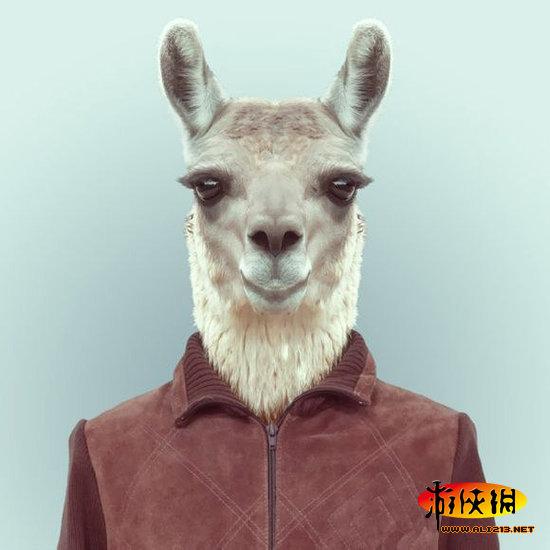 你从未见过的搞笑动物身份证件照