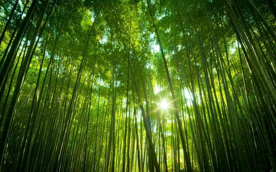 无木不成林,每一棵参天大树都是由小小树苗长成.