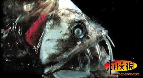10000米恐怖深海鱼图片