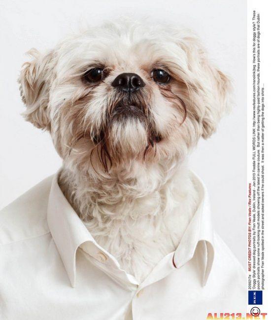 """汪星人穿衣服拍肖像照 """"狗模人样""""一本正经"""