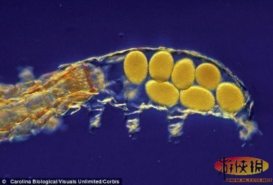 微生物超高清图像:自然界中最伟大的幸存者