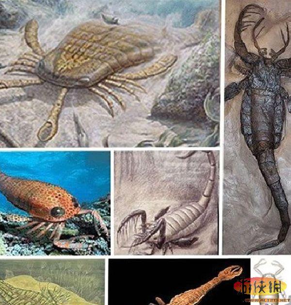 十四种怪异动物:上龙曾出没于世界上的海洋(10)