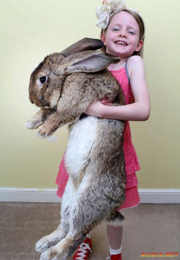 世界最大兔子讓你開開眼!體長逾一米重達45斤
