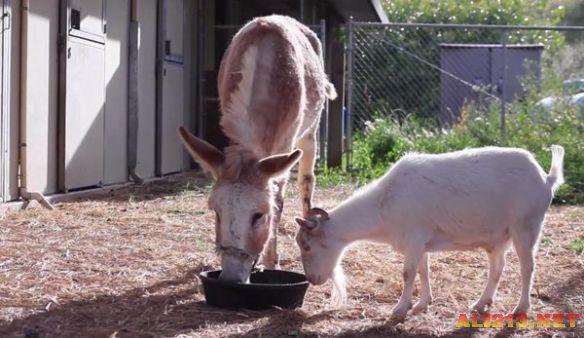 十个有关动物的治愈系小故事