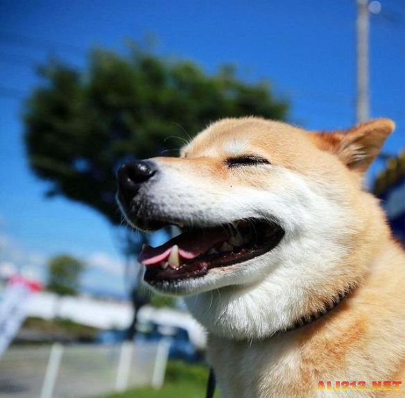 动物笑得图片大全