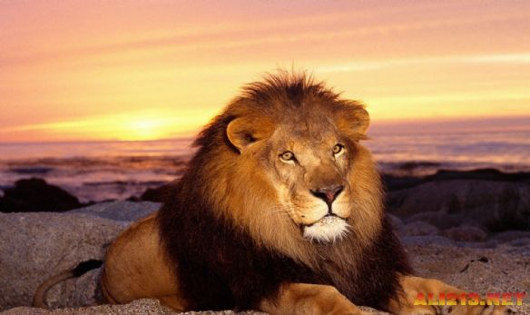 世界上最可怕动物top10