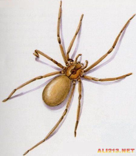 可怕蜘蛛步骤大图