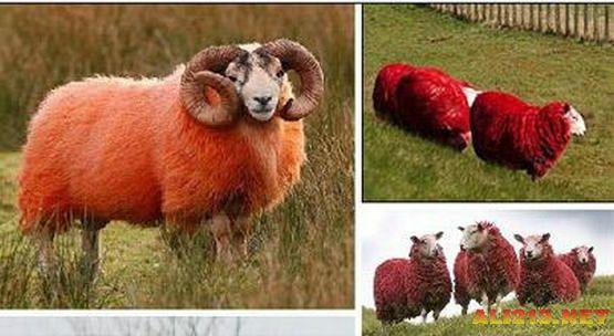 盘点自然界十大少见的红色动物