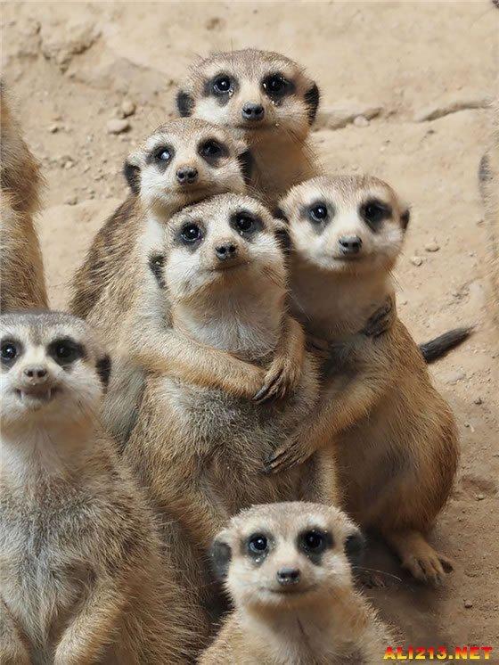 做一只低调的方便面君!动物家族们组团来秀幸福
