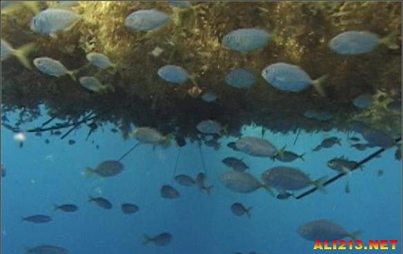 巨型乌贼用大脑消化食物 揭秘海洋生物的十大神奇之处
