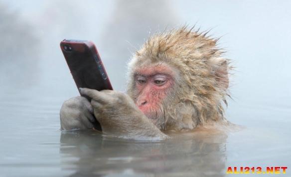 电影猴子无奇不有:呆萌世间泡百态玩iPhone获影音美女写真先锋温泉图片