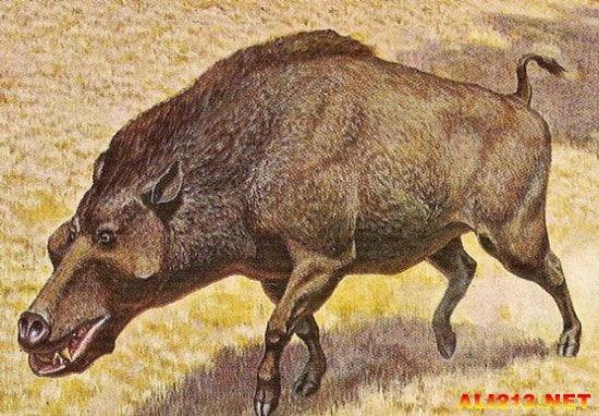 盘点十种小动物的巨型祖先 古巨龟体重可达两吨