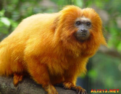 盘点自然界十大迷人的金色动物