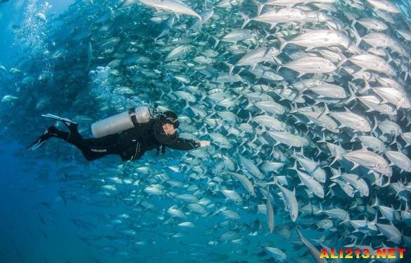 壁纸 海底 海底世界 海洋馆 水族馆 桌面 584_373