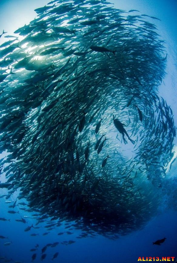 凯恩被鱼群形成的海底