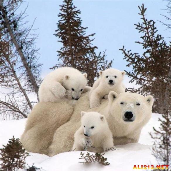 这些动物亲子照绝了,全家都是萌萌的