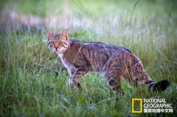 从未见过的猫科动物图集