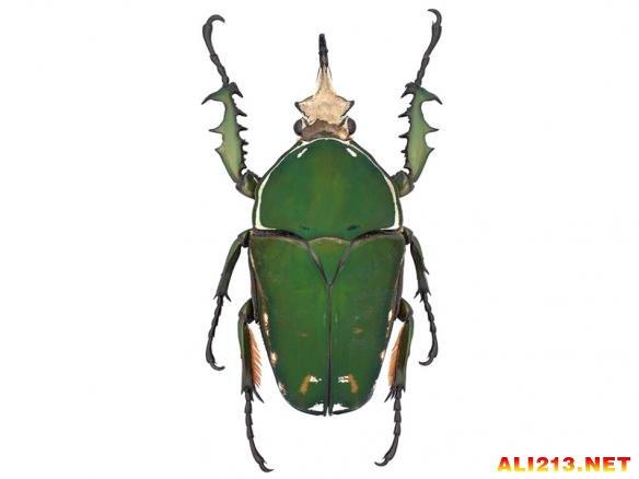 节肢动物才是地球的统治者!走进神奇奇妙的甲虫世界