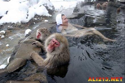 世界上最会泡温泉的猴子?日本野猿公苑最受游客欢迎