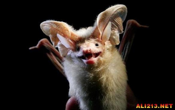 动物世界的非主流:看看地球上那些最丑最怪的生物